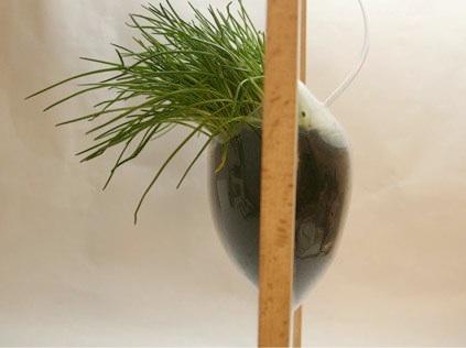 Herbal Window